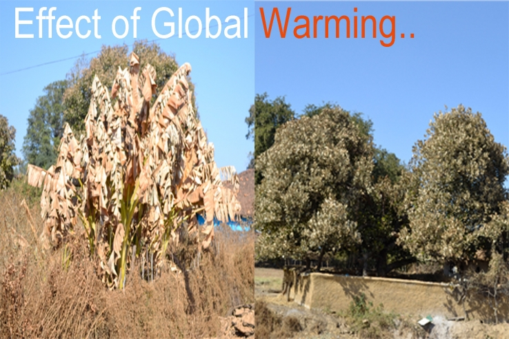cause effects of global warming essay